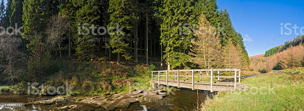 Forest bridge over valley stream royalty-free stock photo
