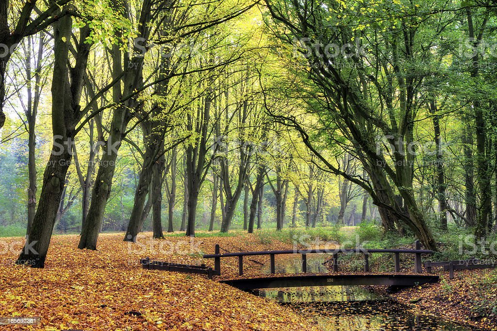 Forest bridge royalty-free stock photo