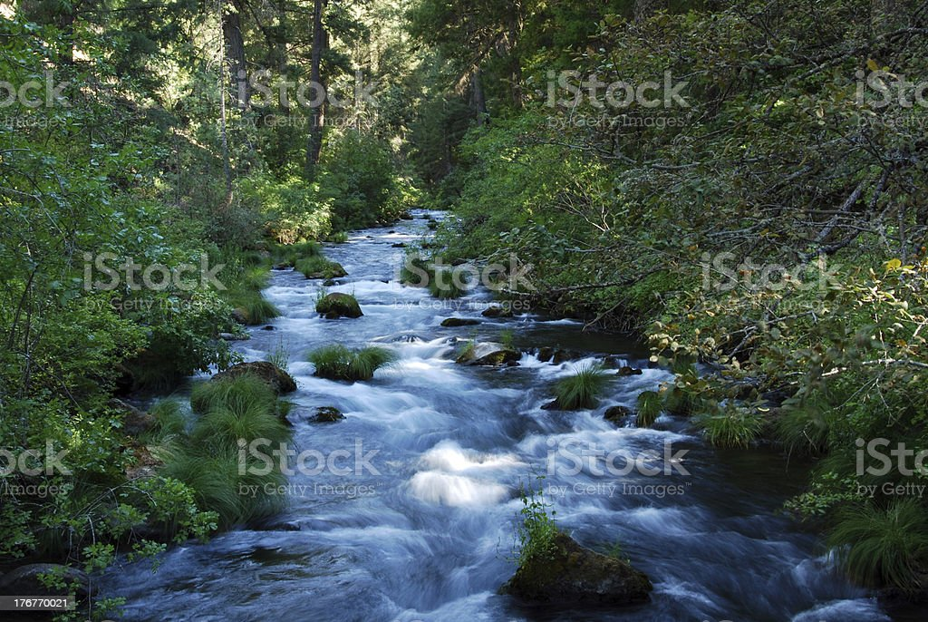 Forest Brook royalty-free stock photo