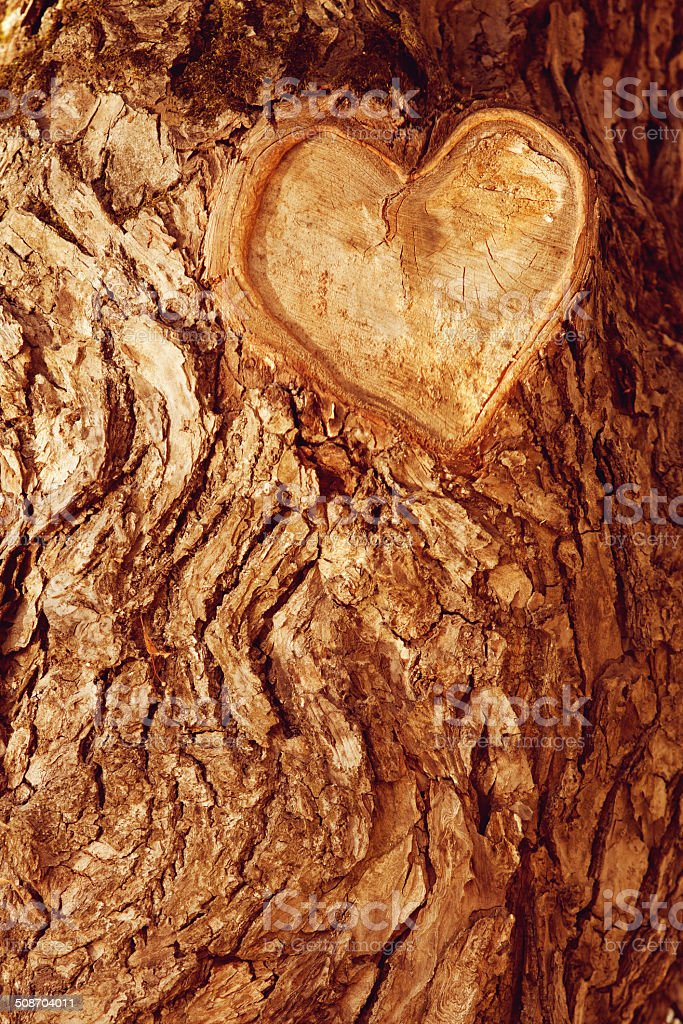 Forest brown wooden background. Texture forest wooden tree bark stock photo