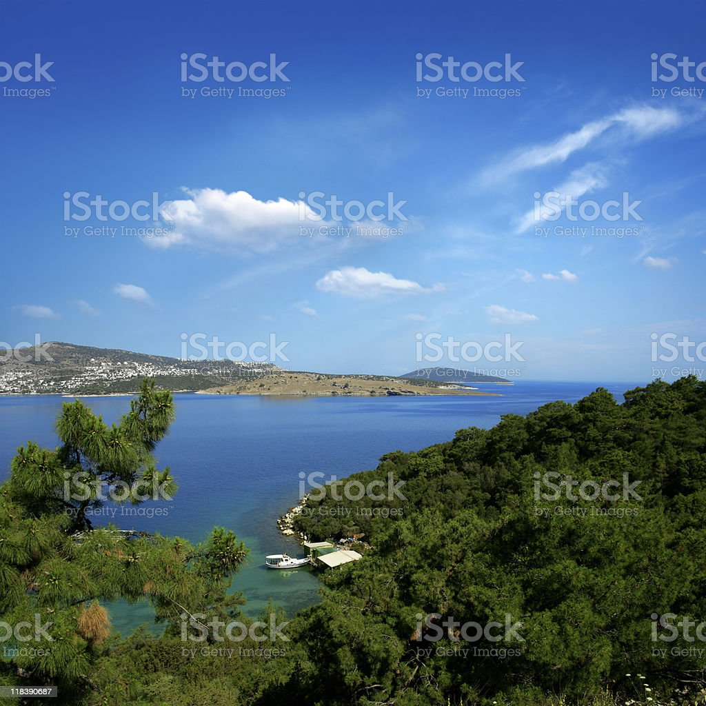 forest by sea stock photo