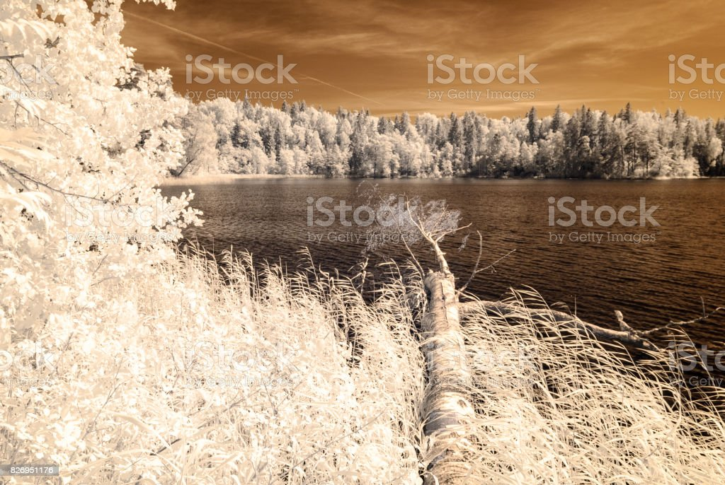 forest by the lake. infrared colored image stock photo