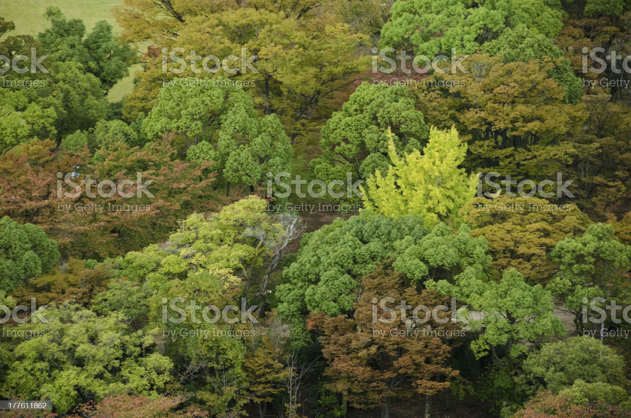 Forest canopy as seen from above royalty-free stock photo