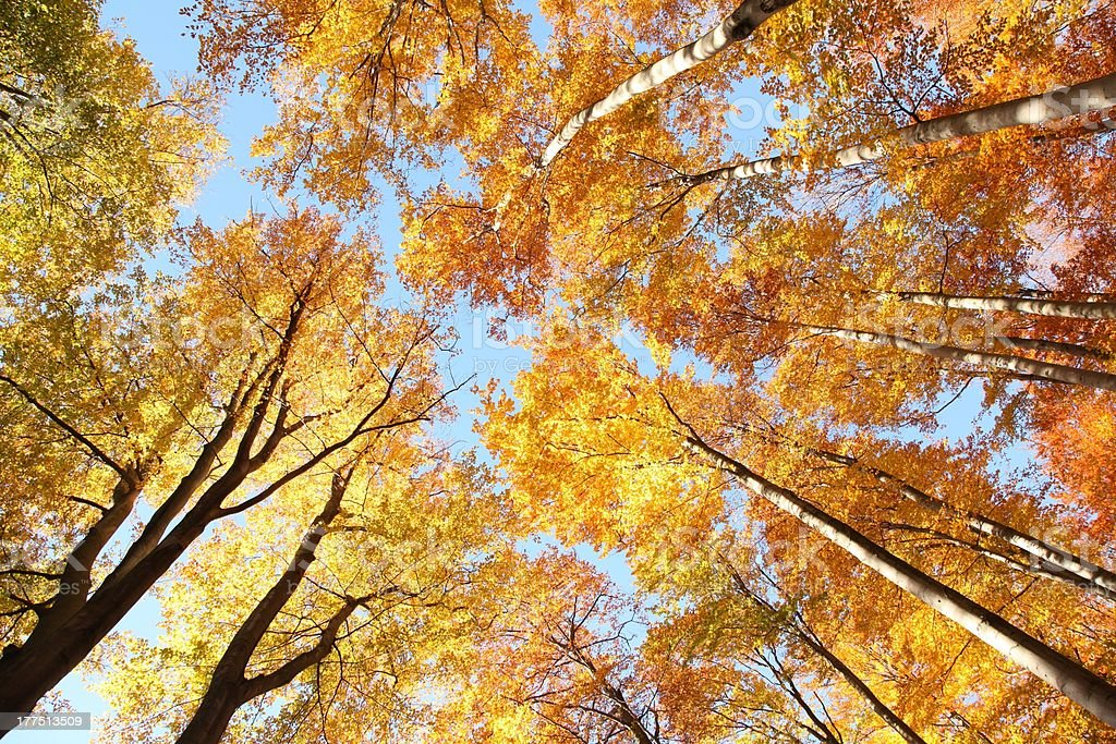Forest canopy royalty-free stock photo