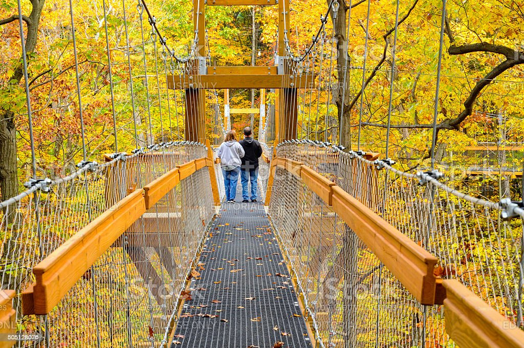 Forest canopy walk stock photo