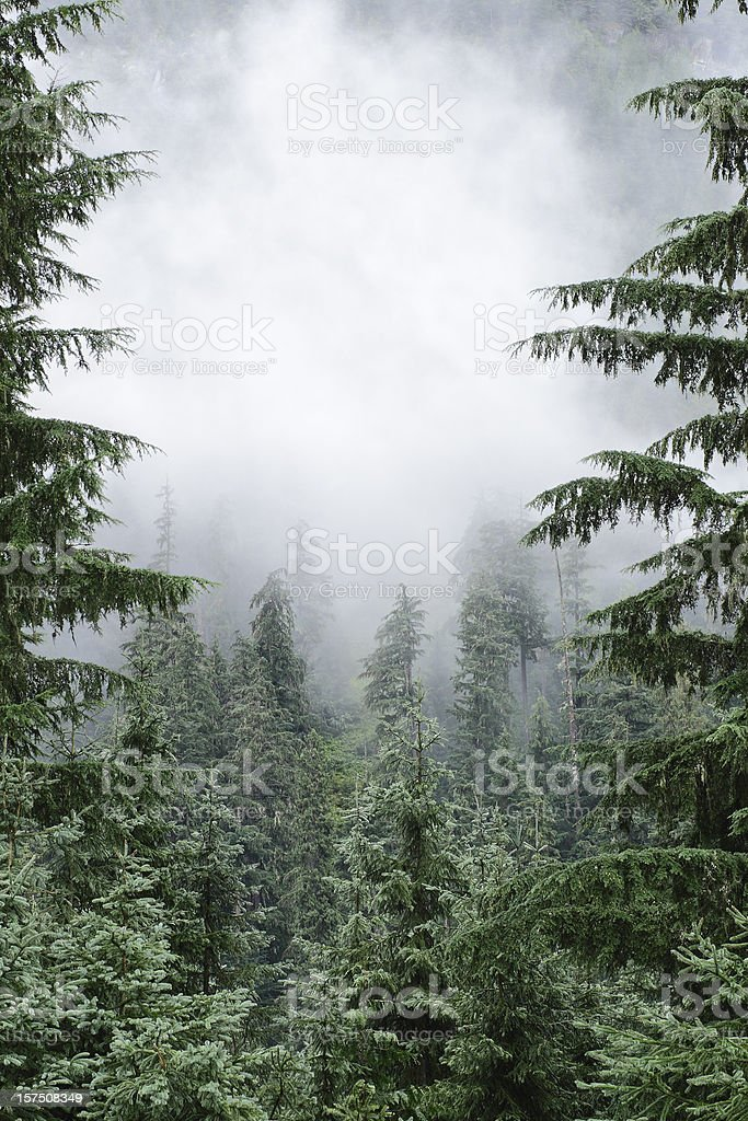 Forest Cloud stock photo