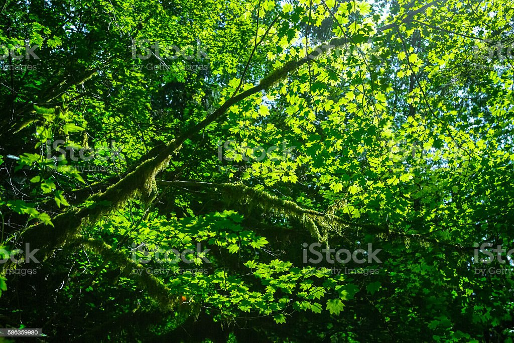 Forest Contrasts stock photo