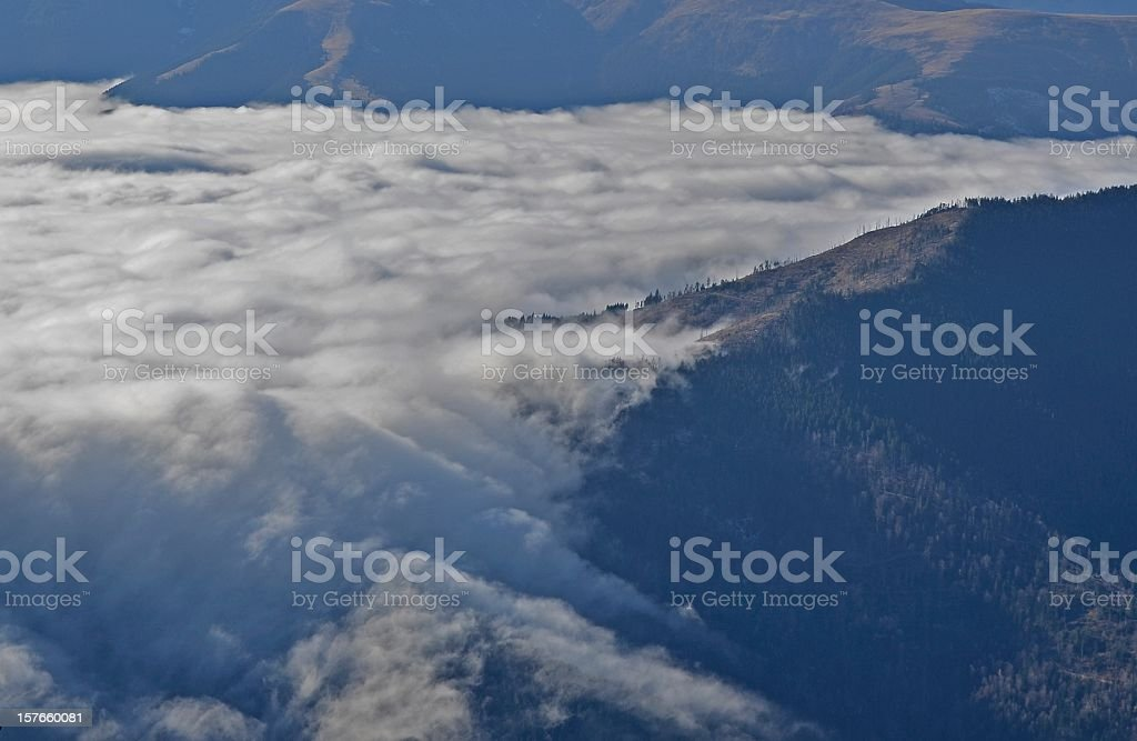 Forest covered by fog royalty-free stock photo