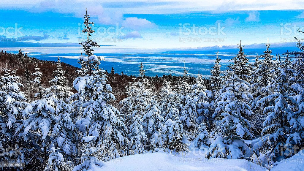 Forest covered by fresh snow on the mountain in winter royalty-free stock photo