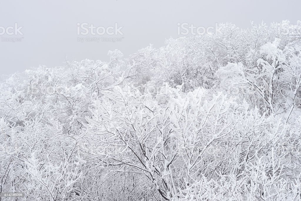 Forest Covered by Snow in Winter Landscape stock photo
