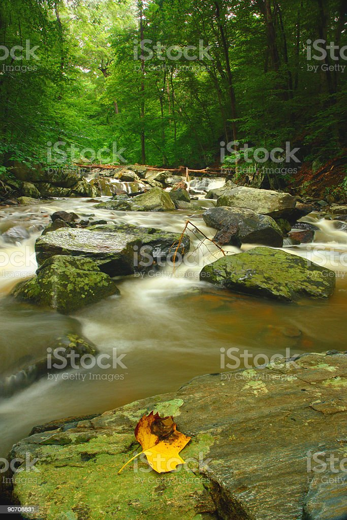 forest creek boulders and leaf royalty-free stock photo