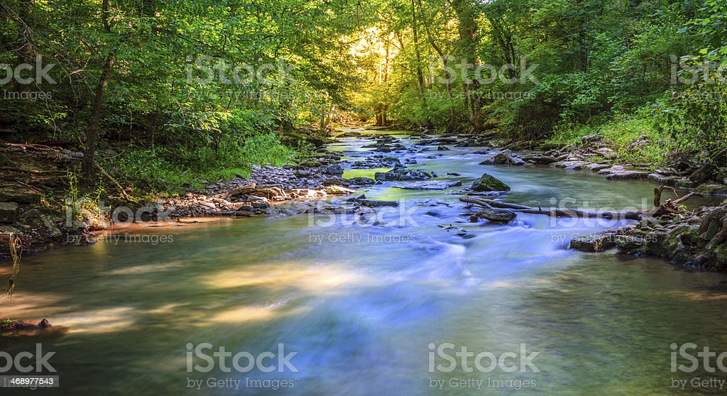 Forest creek stock photo
