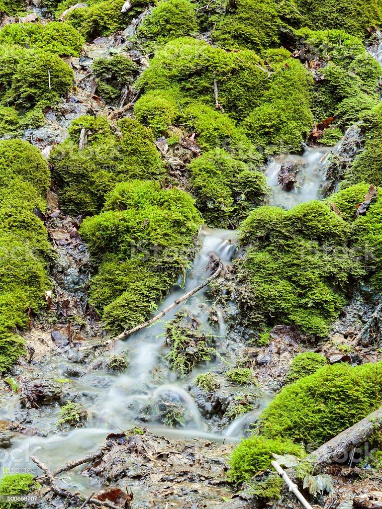 Forest Creek Lizenzfreies stock-foto