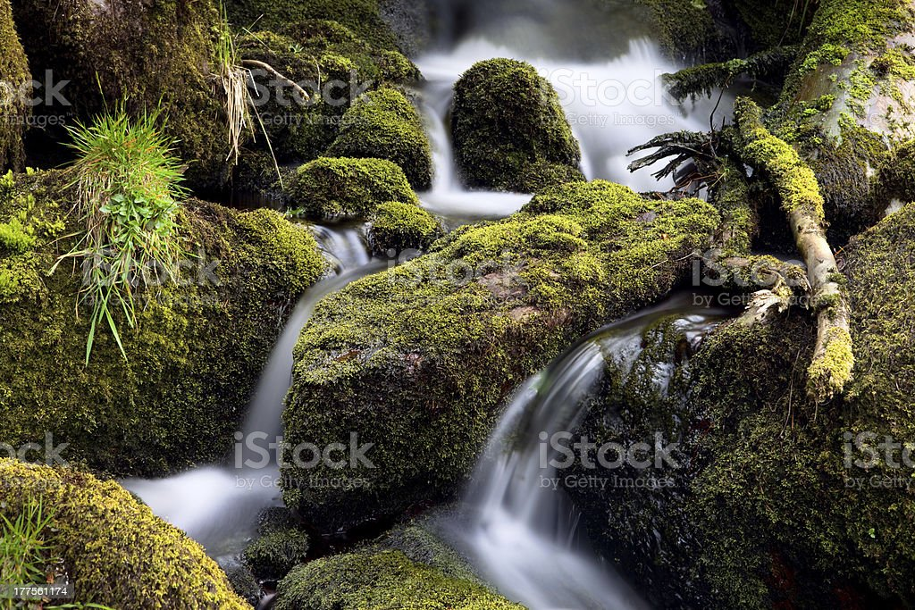 forest creek streaming between moss stock photo