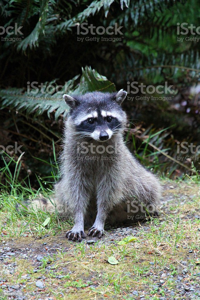 Forest Critter stock photo