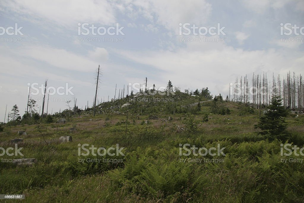 forest decline stock photo