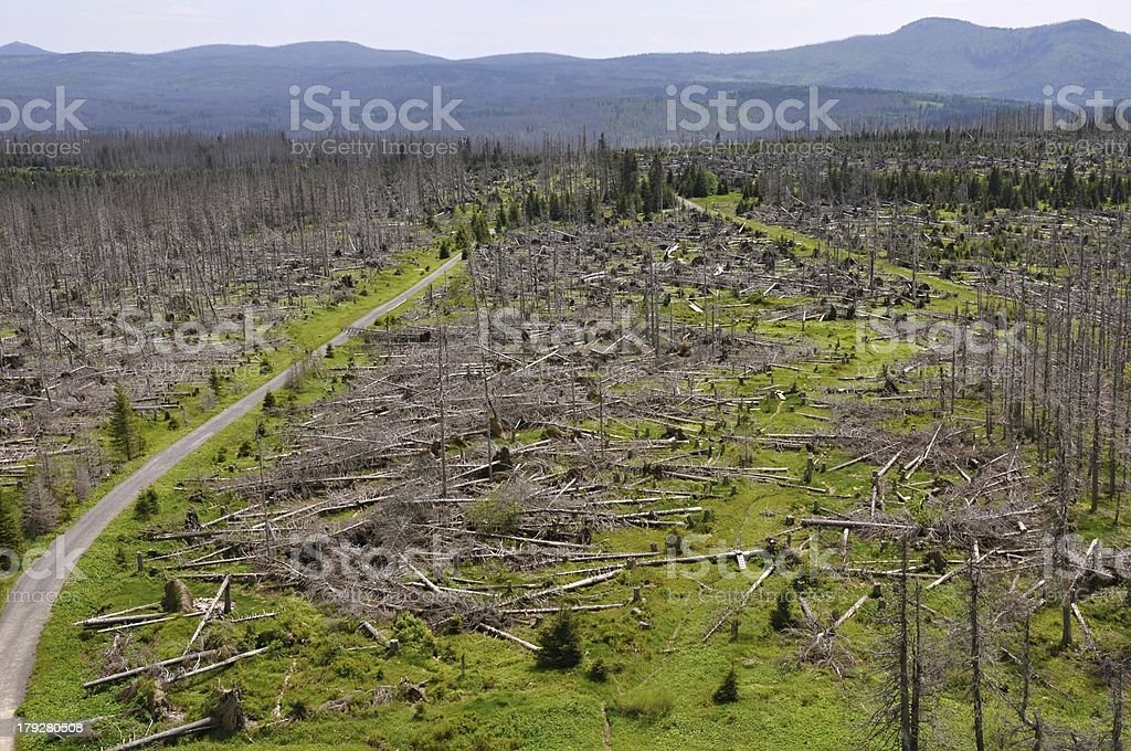 Forest destroyed by bark beetle and hurricane royalty-free stock photo
