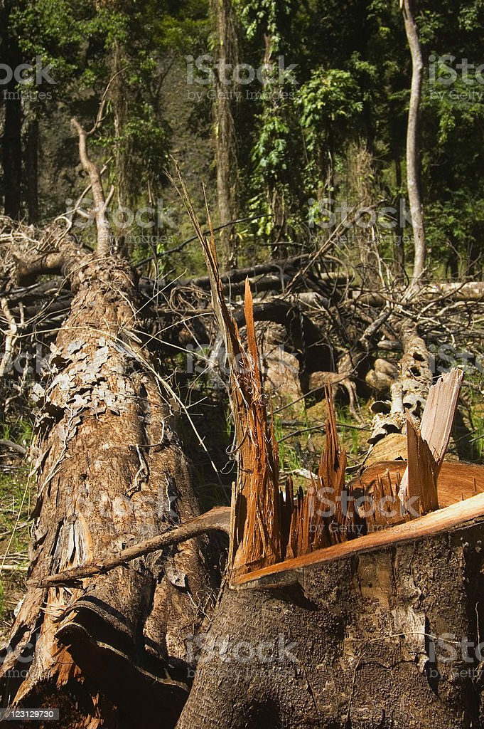 Forest Destruction stock photo