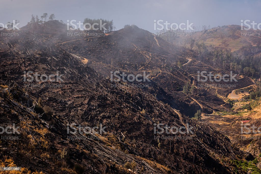 Forest devastated by fire in the mountains stock photo