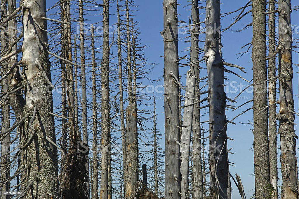 Forest dieback, Bavaria, Germany stock photo