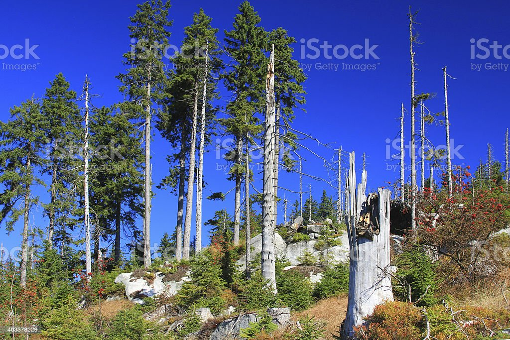 Forest dieback, Bavaria, Germany stock photo