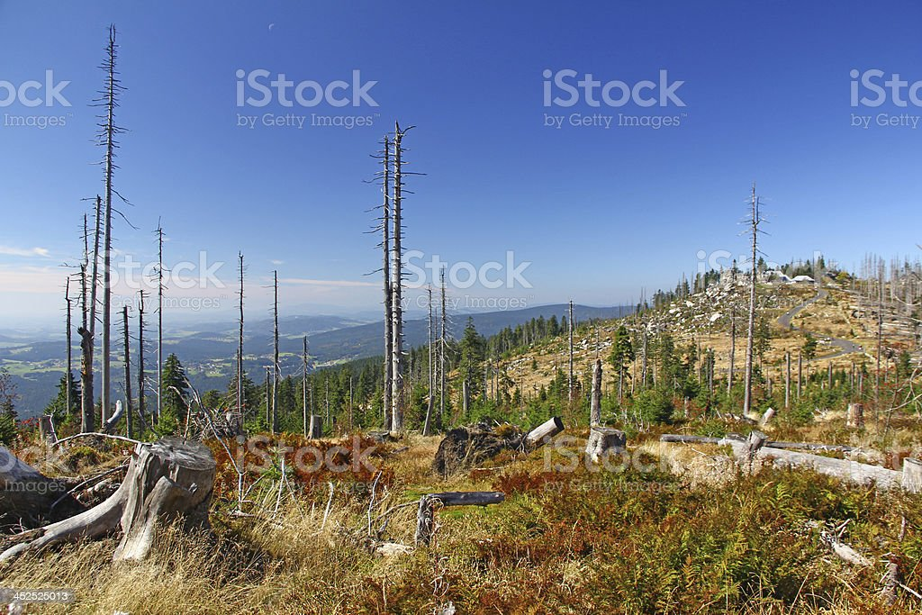 Forest dieback, Germany stock photo