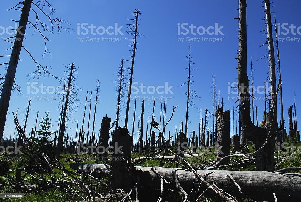 forest dieback III stock photo