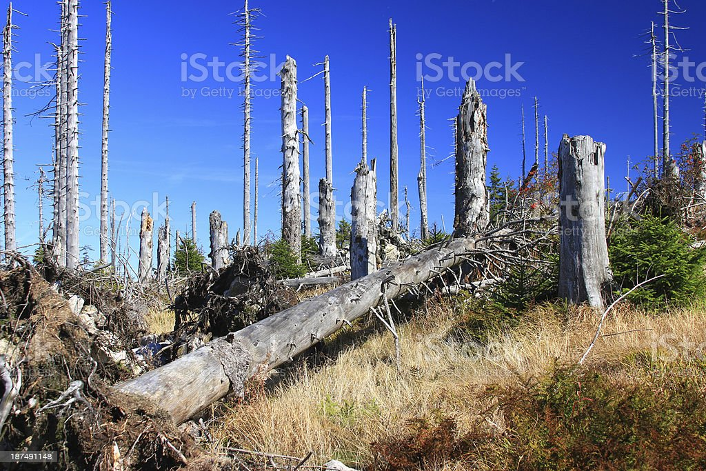 Forest dieback stock photo