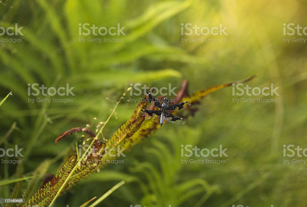 Forest dragon royalty-free stock photo
