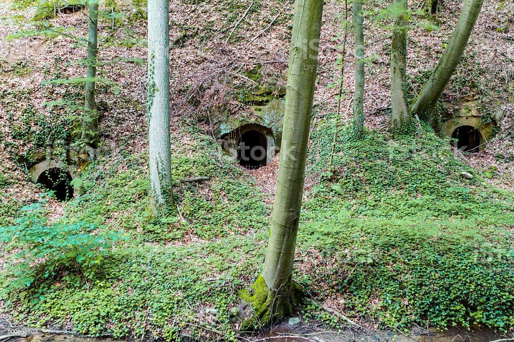 Forest Dungeon Lizenzfreies stock-foto