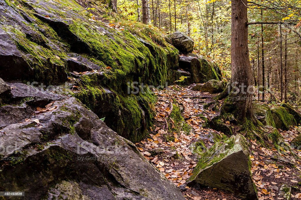 Forest during Autumn season in Michigan stock photo