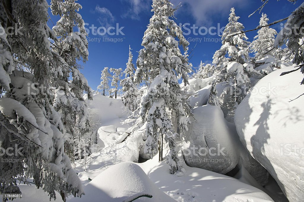 Forest during the winter stock photo