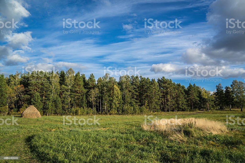 Forest edge, Siberia stock photo
