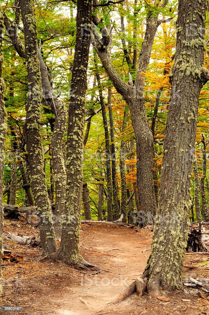 Forest, El Chalten, Patagonia, Argentina royalty-free stock photo
