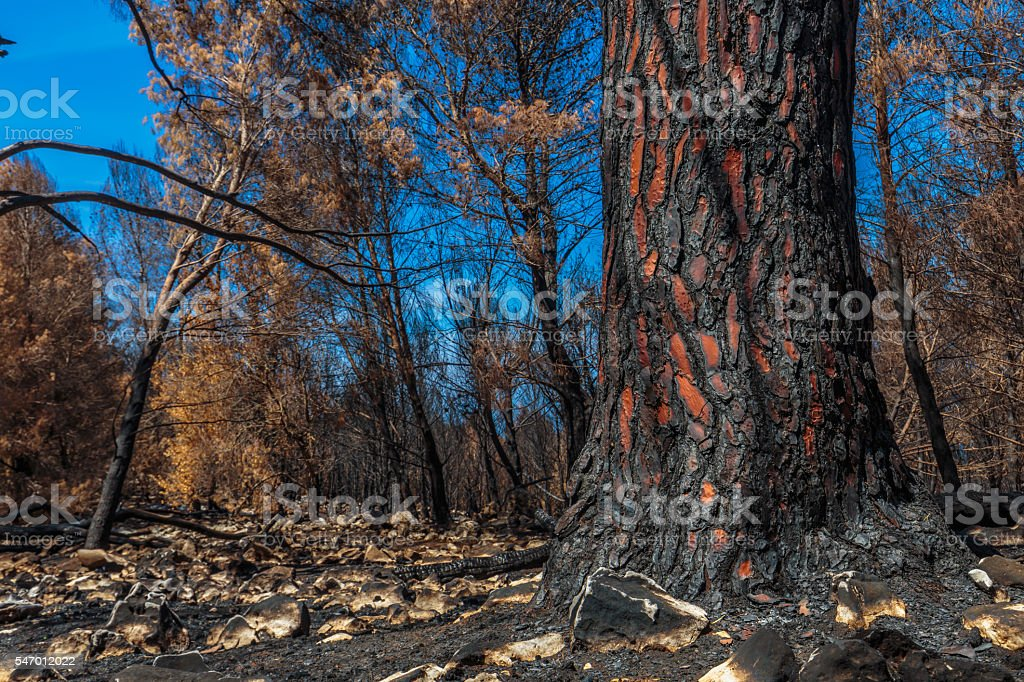 Forest Fire Aftermath in Sicily, Italy stock photo