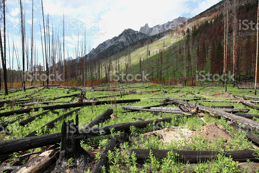 Forest Fire Aftermath stock photo
