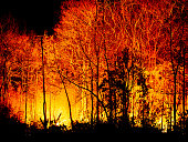 Forest Fire Burning at Night.