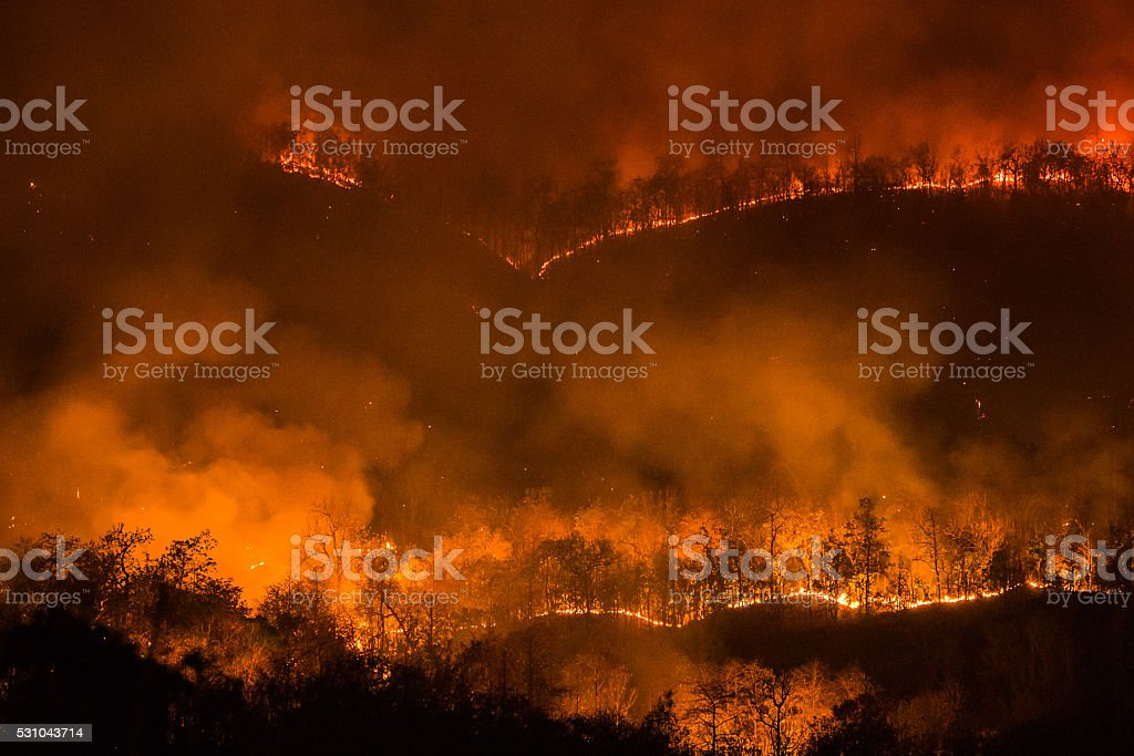 Forest fire burning, Wildfire at night. stock photo