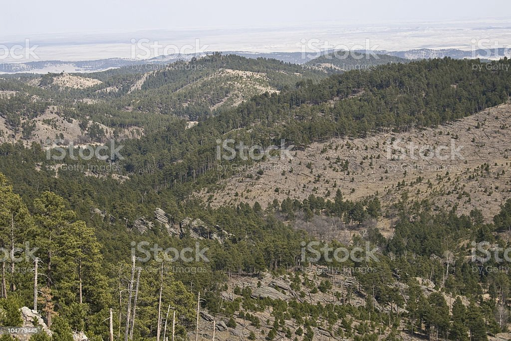 Forest Fire Damage in the Black Hills stock photo
