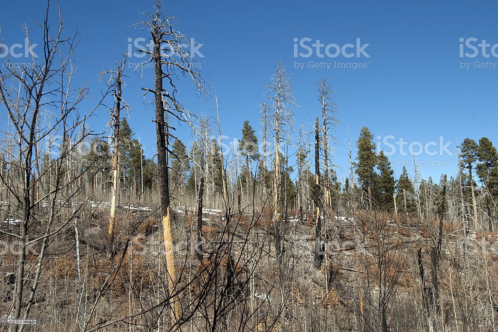 Forest Fire Damage royalty-free stock photo