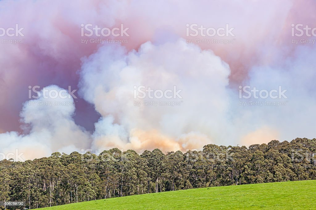 Forest Fire in Australia stock photo