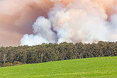Forest Fire in Australia