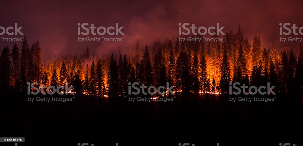 Forest Fire Panorama stock photo
