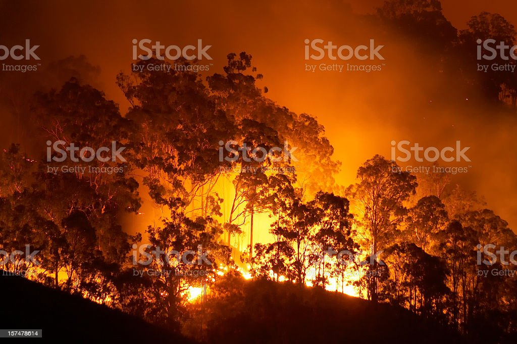 Forest fire stock photo