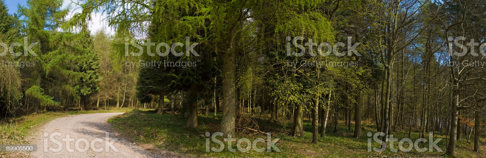 Forest fire road royalty-free stock photo