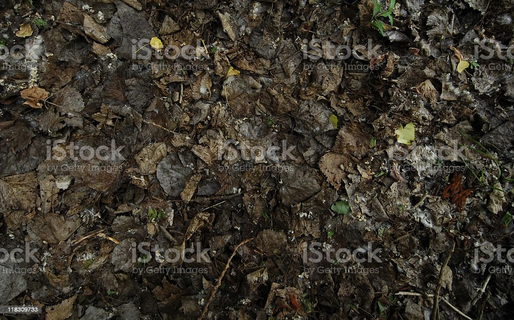 Forest Floor Background stock photo