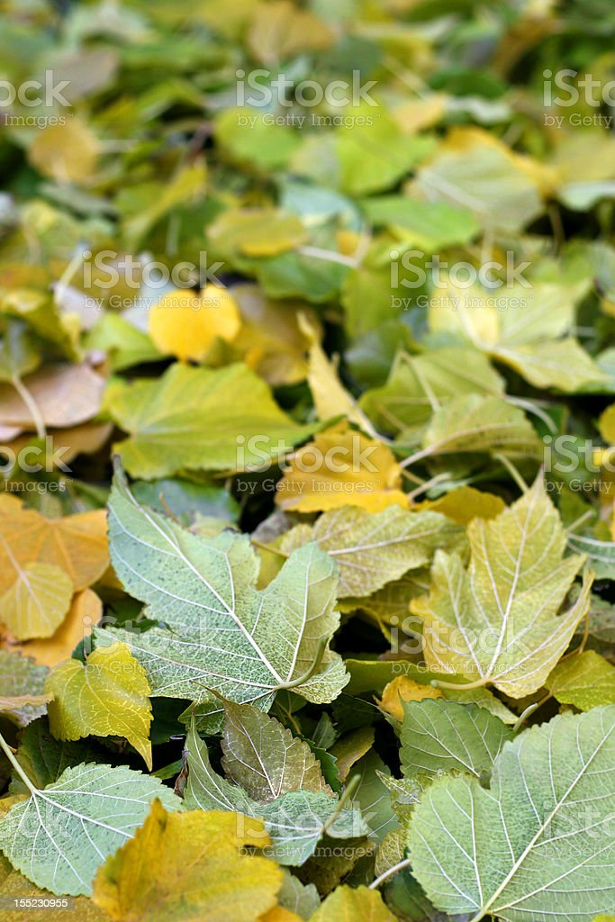 Forest Floor in Autumn stock photo