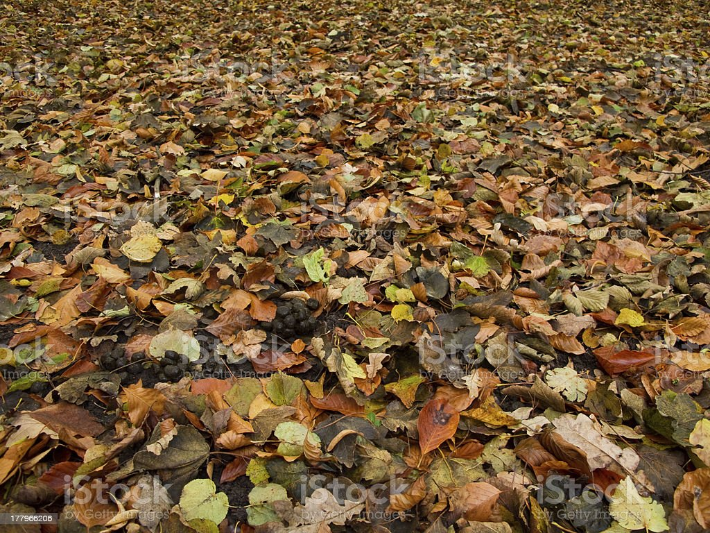 forest floor in autumn royalty-free stock photo