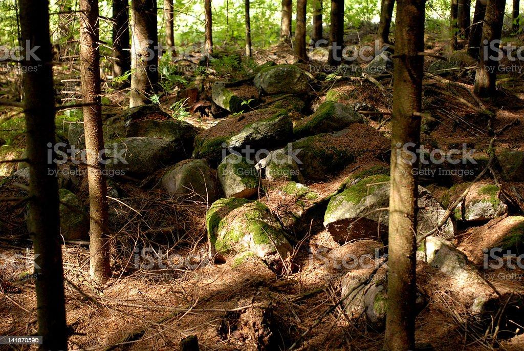 Foresta piano foto stock royalty-free