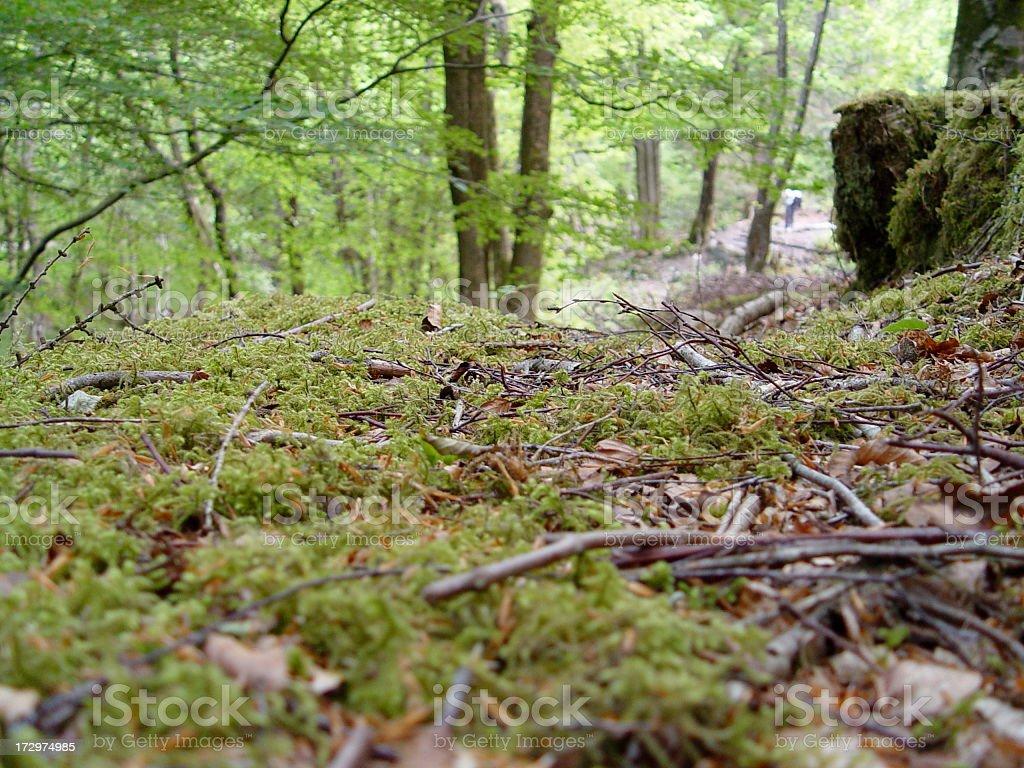 Forest floor stock photo